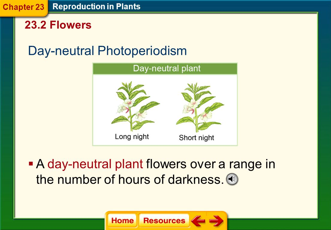 Day-neutral Photoperiodism