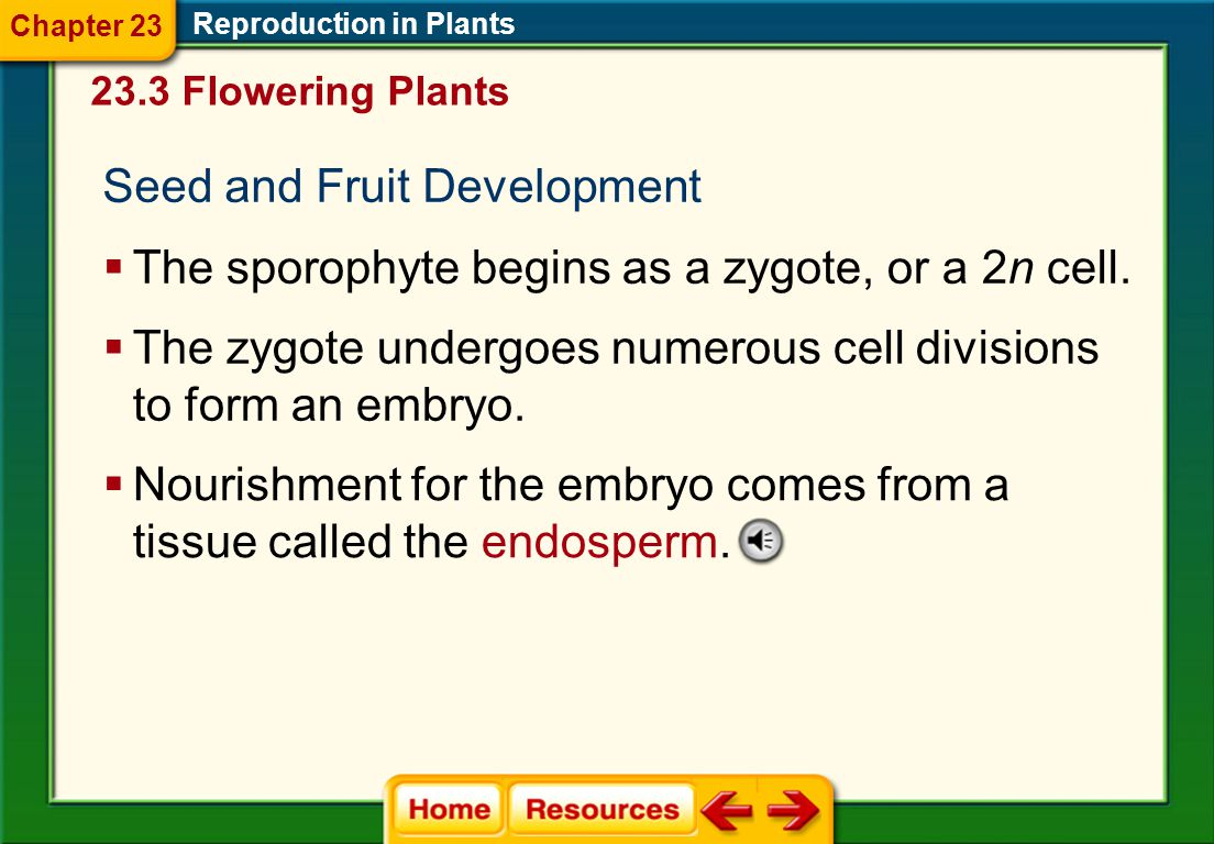 Seed and Fruit Development