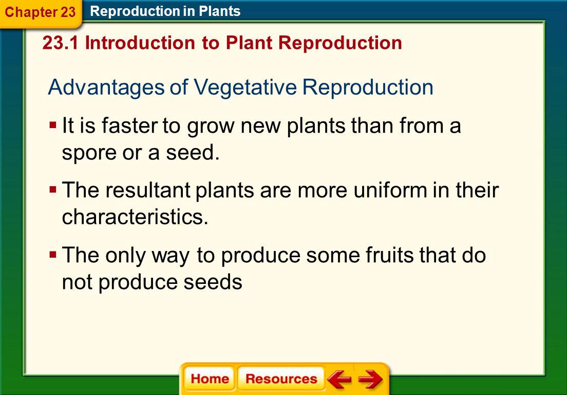 Advantages of Vegetative Reproduction