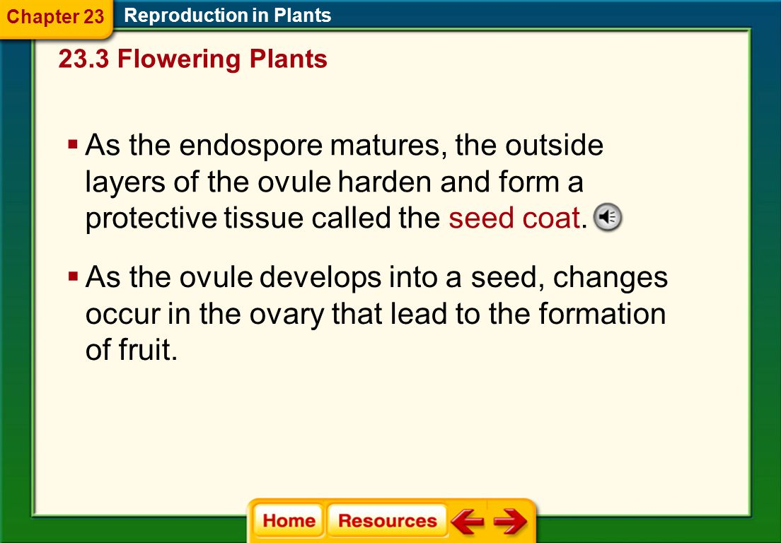 Chapter 23 Reproduction in Plants. 23.3 Flowering Plants.