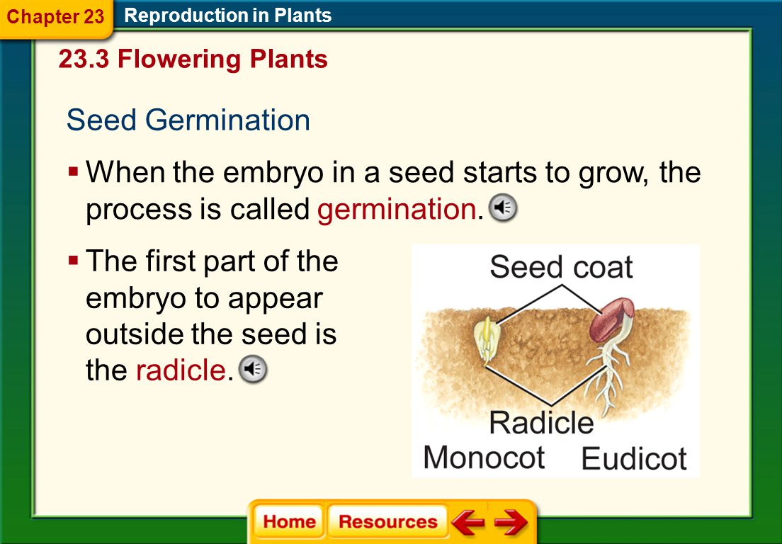 Chapter 23 Reproduction in Plants. 23.3 Flowering Plants. Seed Germination.