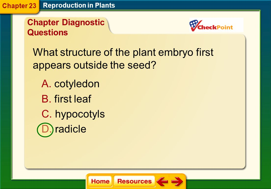 What structure of the plant embryo first appears outside the seed