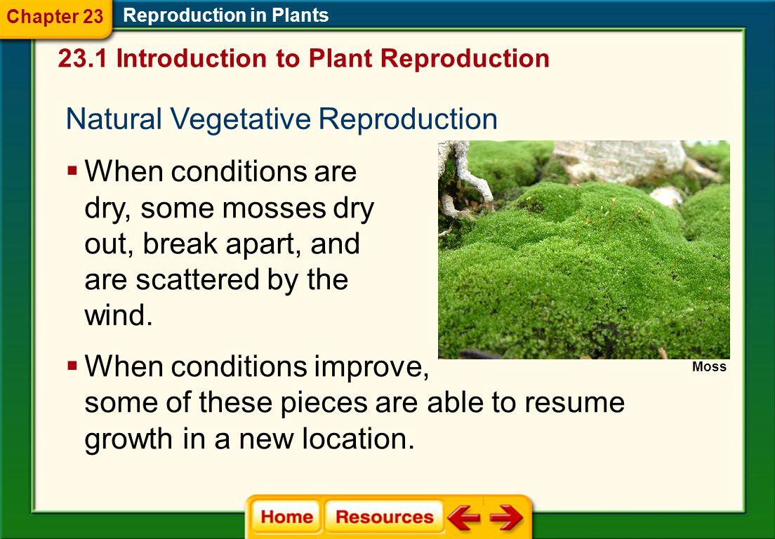 Natural Vegetative Reproduction