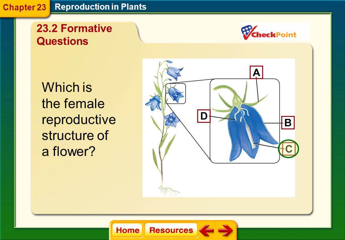 Which is the female reproductive structure of a flower