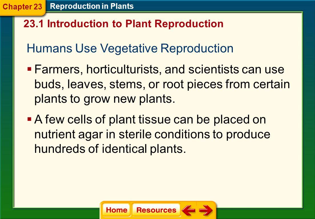 Humans Use Vegetative Reproduction