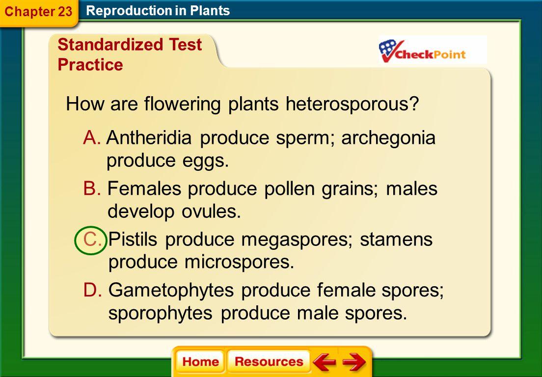 How are flowering plants heterosporous