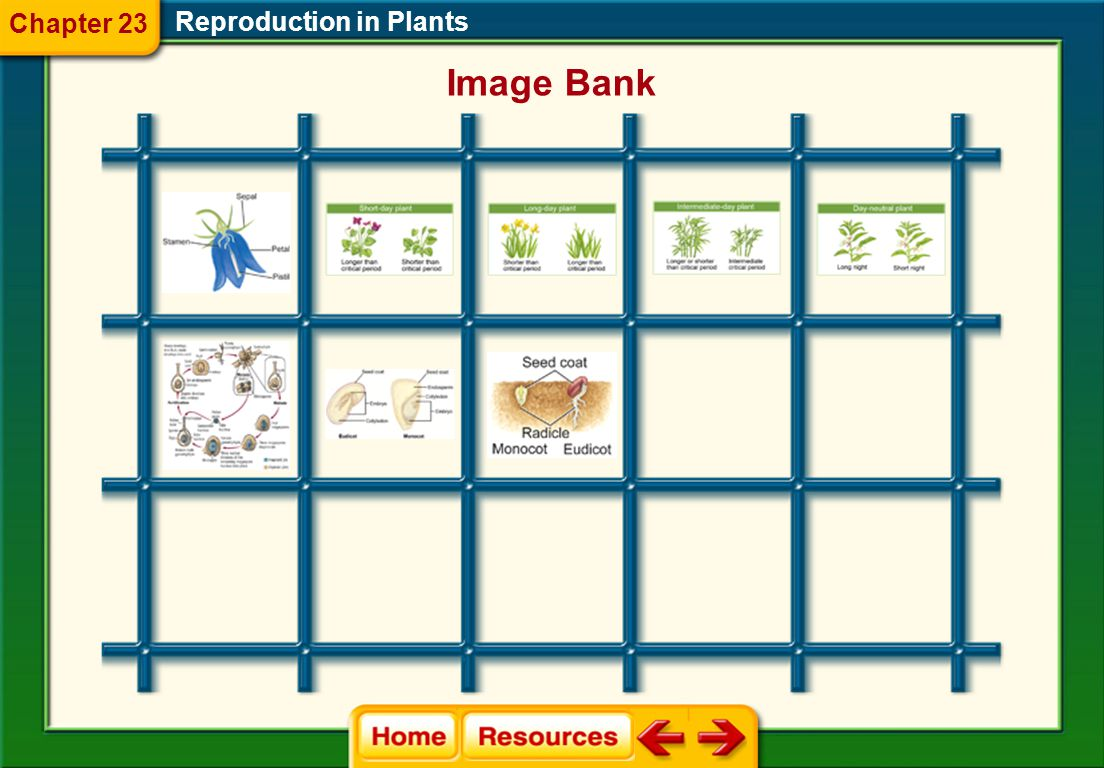 Chapter 23 Reproduction in Plants Image Bank