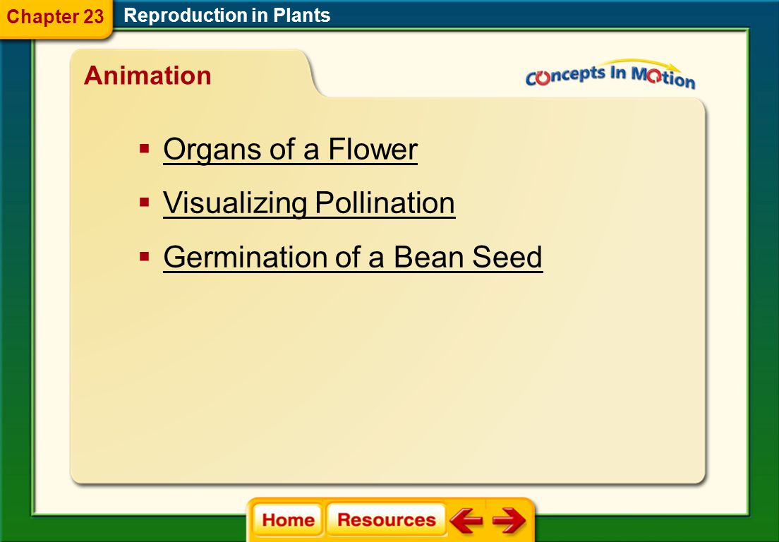 Visualizing Pollination Germination of a Bean Seed