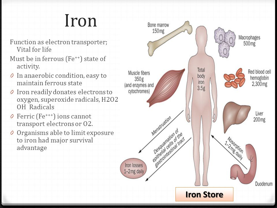 Iron Iron Store Function as electron transporter; Vital for life