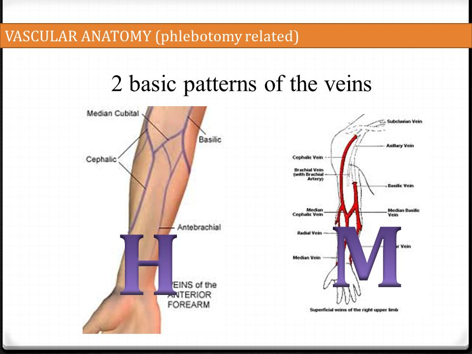 M H 2 basic patterns of the veins