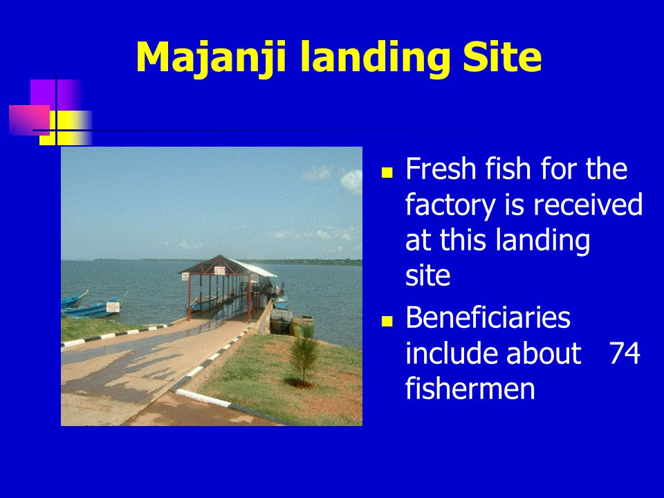 Majanji landing Site Fresh fish for the factory is received at this landing site.