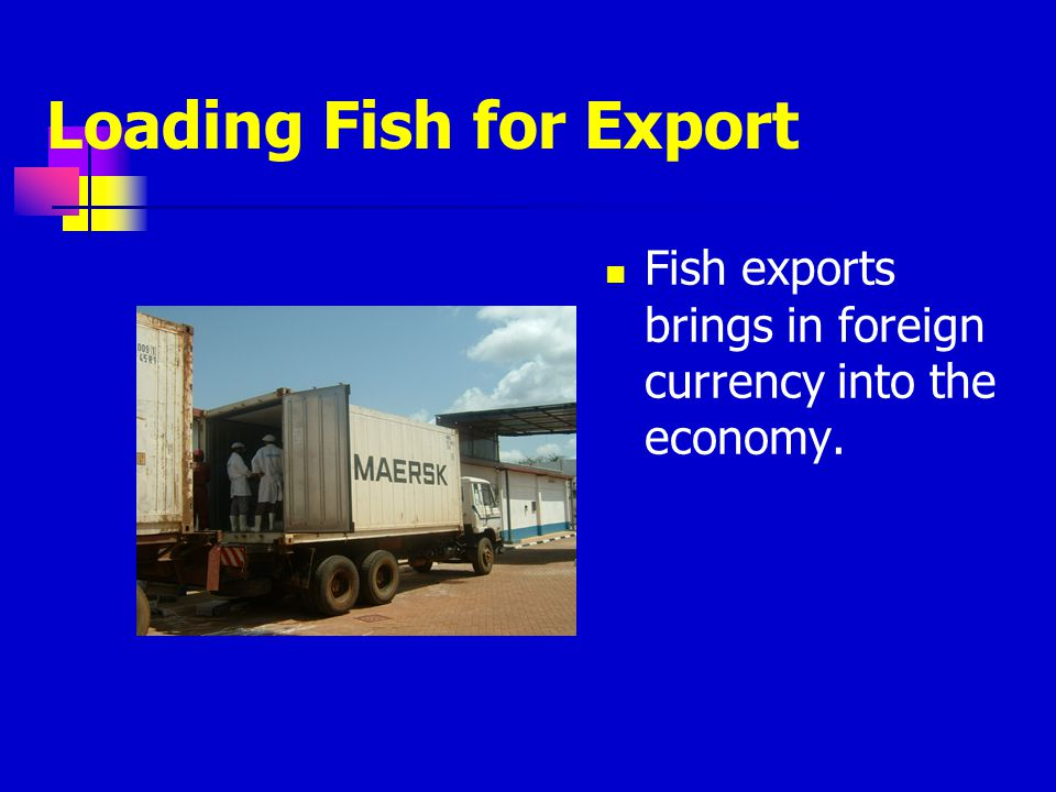 Loading Fish for Export