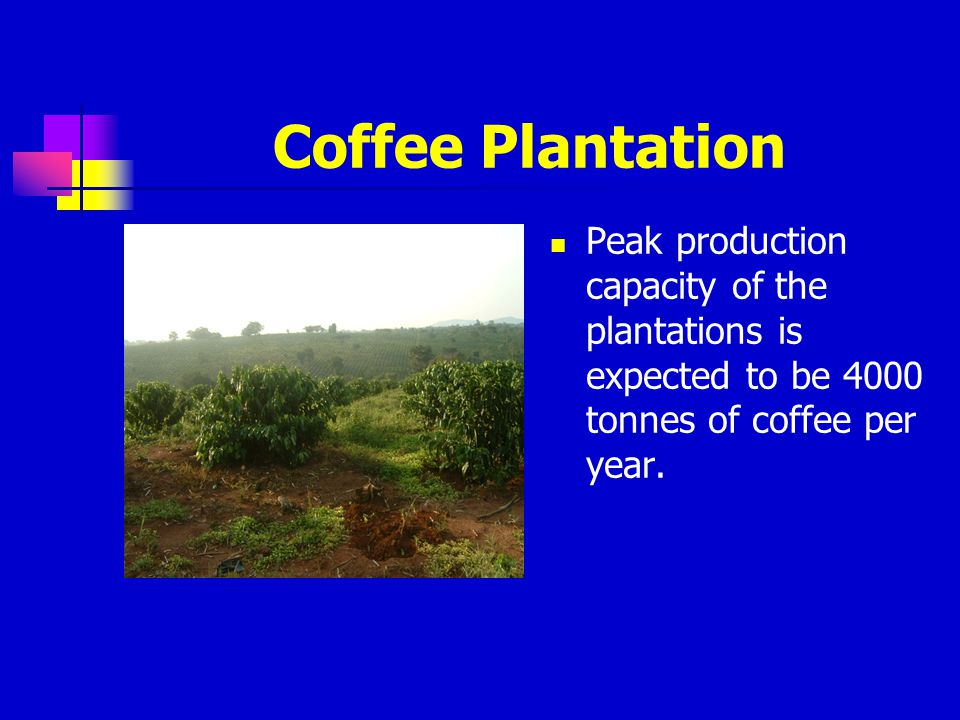 Coffee Plantation Peak production capacity of the plantations is expected to be 4000 tonnes of coffee per year.