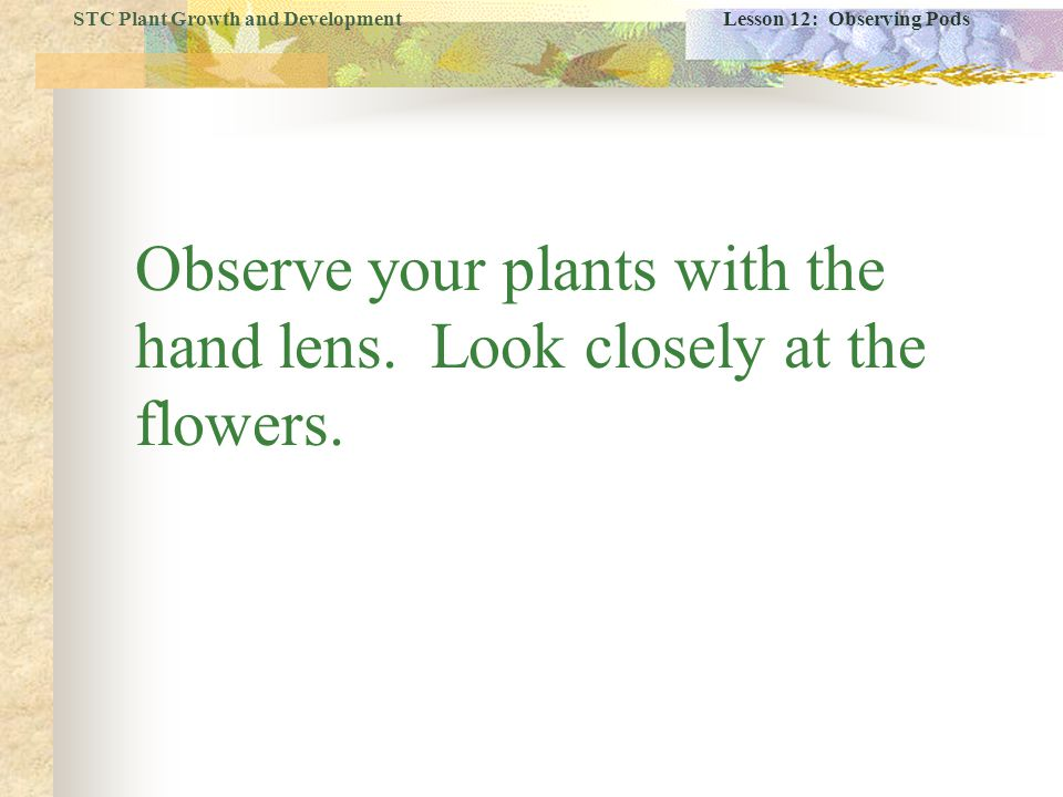 Observe your plants with the hand lens. Look closely at the flowers.