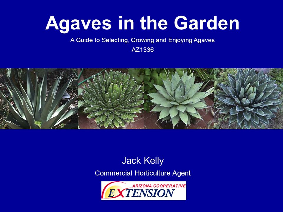 Agaves in the Garden Jack Kelly Commercial Horticulture Agent
