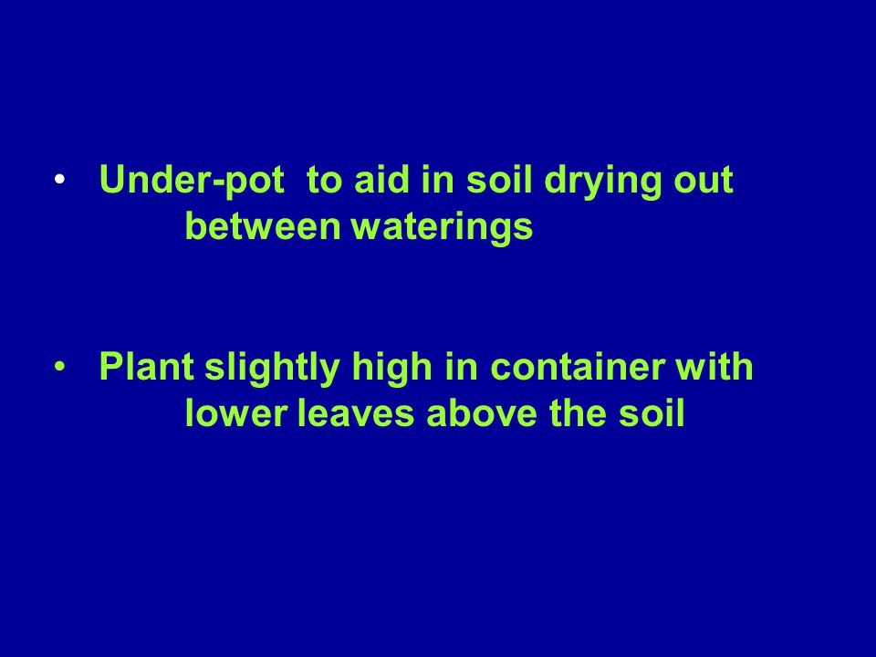 Under-pot to aid in soil drying out between waterings
