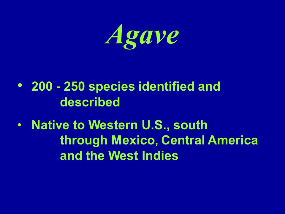 Agave 200 - 250 species identified and described