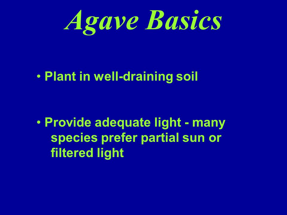 Agave Basics Plant in well-draining soil
