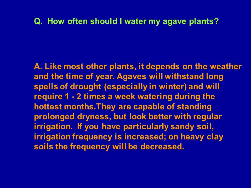 Q. How often should I water my agave plants