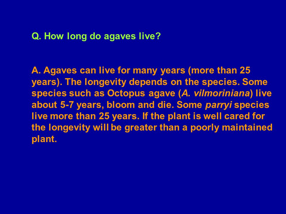 Q. How long do agaves live