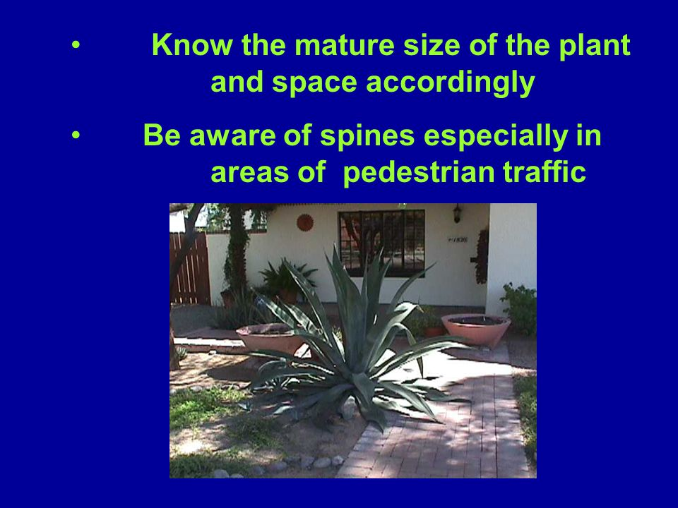 Know the mature size of the plant and space accordingly