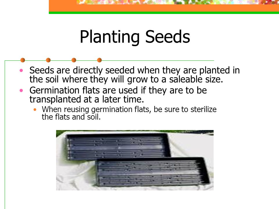 Planting Seeds Seeds are directly seeded when they are planted in the soil where they will grow to a saleable size.