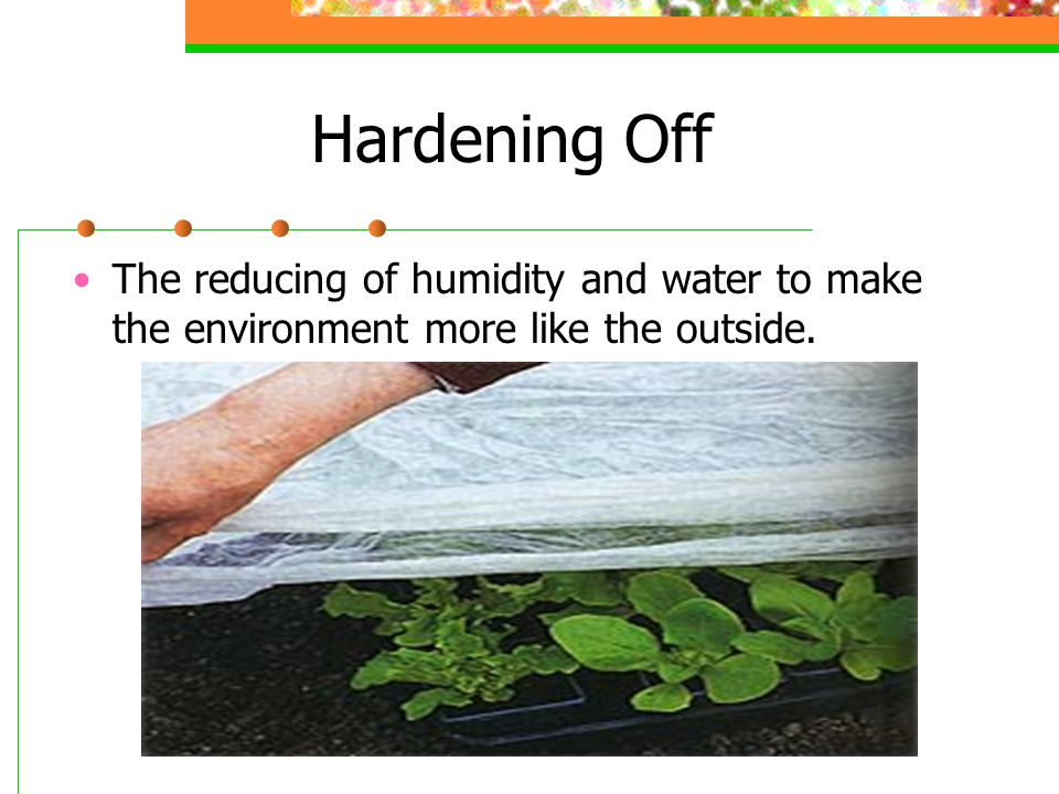 Hardening Off The reducing of humidity and water to make the environment more like the outside.