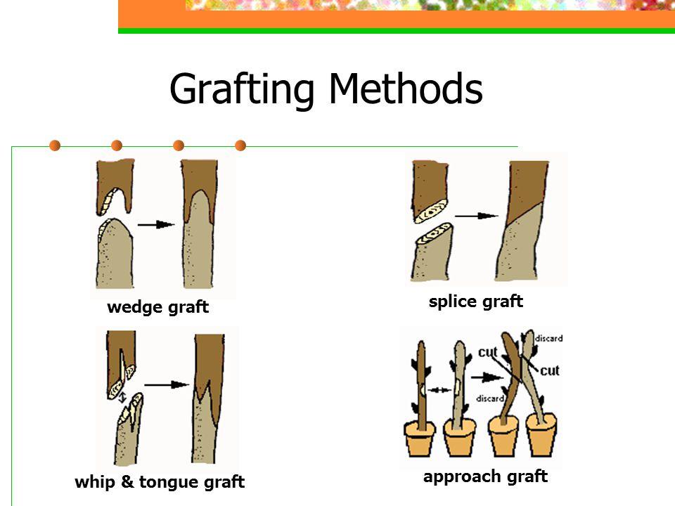 Grafting Methods splice graft wedge graft approach graft