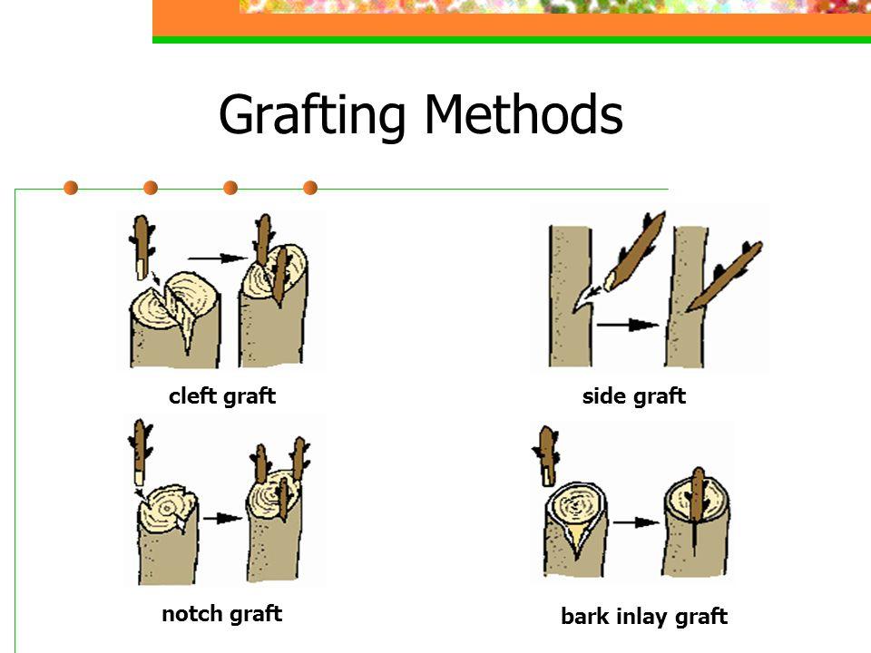 Grafting Methods side graft cleft graft notch graft bark inlay graft