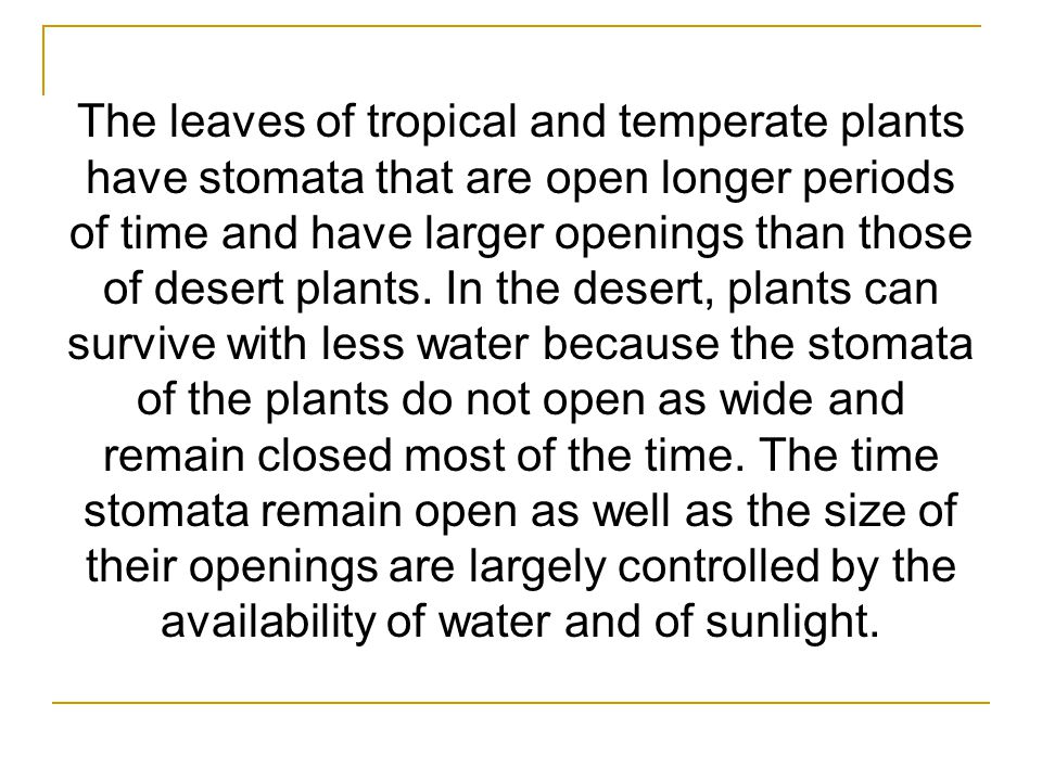 The leaves of tropical and temperate plants have stomata that are open longer periods of time and have larger openings than those of desert plants.