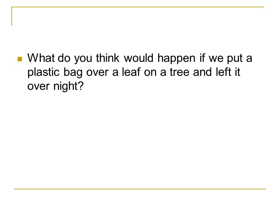 What do you think would happen if we put a plastic bag over a leaf on a tree and left it over night