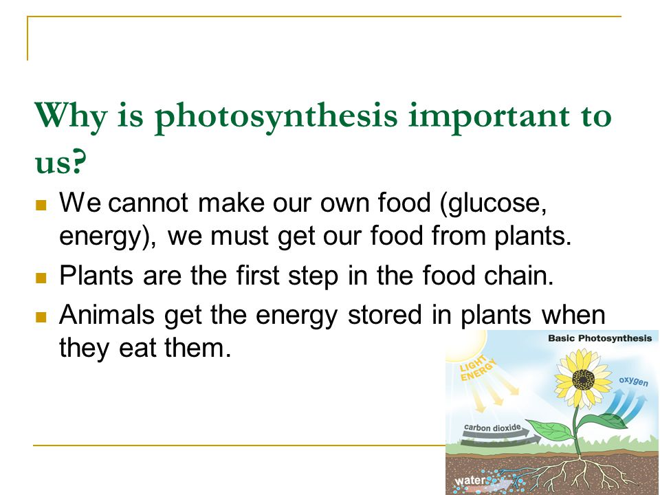 Why is photosynthesis important to us
