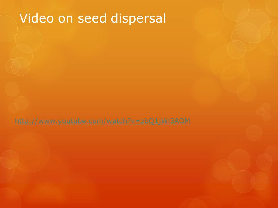 Video on seed dispersal