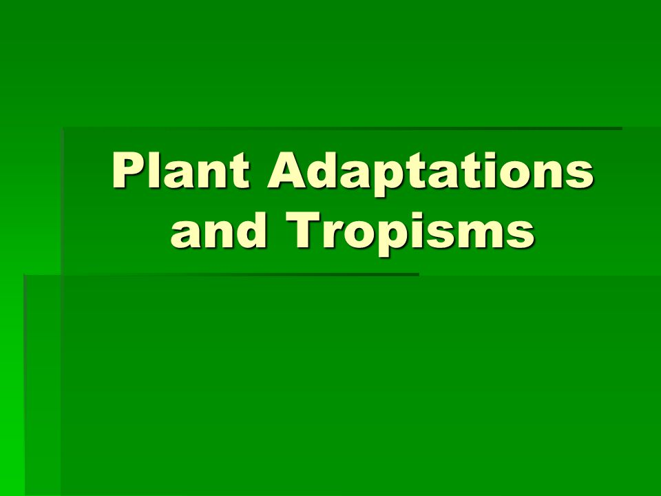 Plant Adaptations and Tropisms