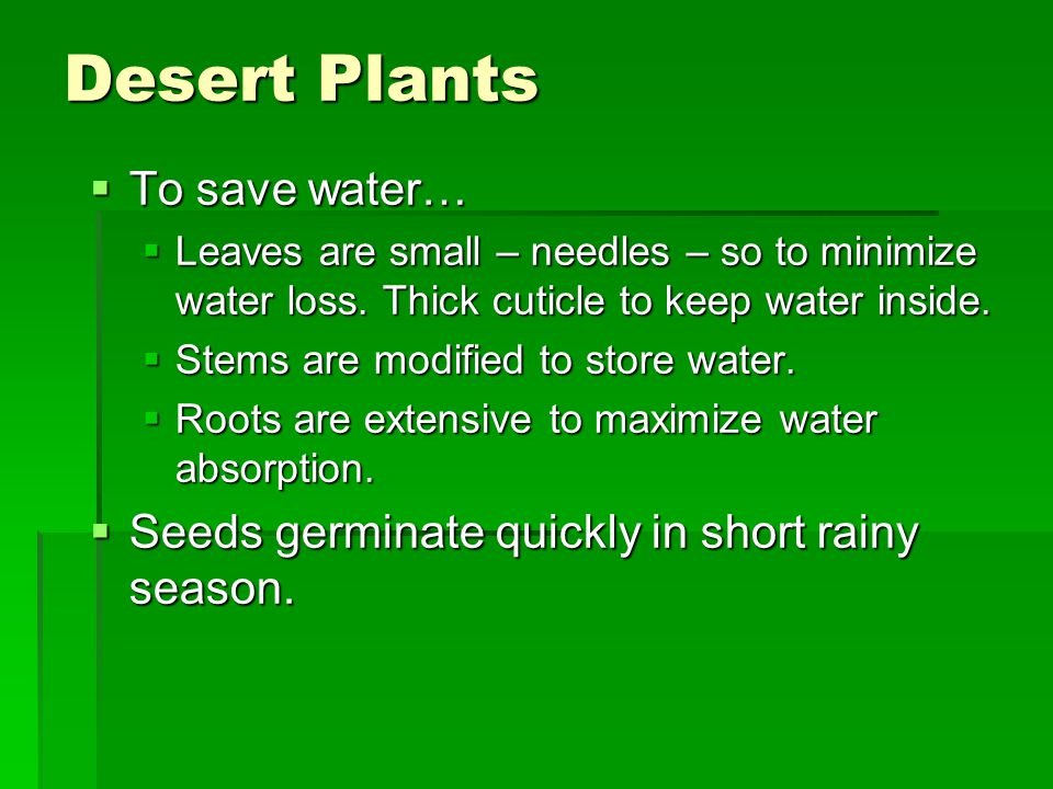 Desert Plants To save water…