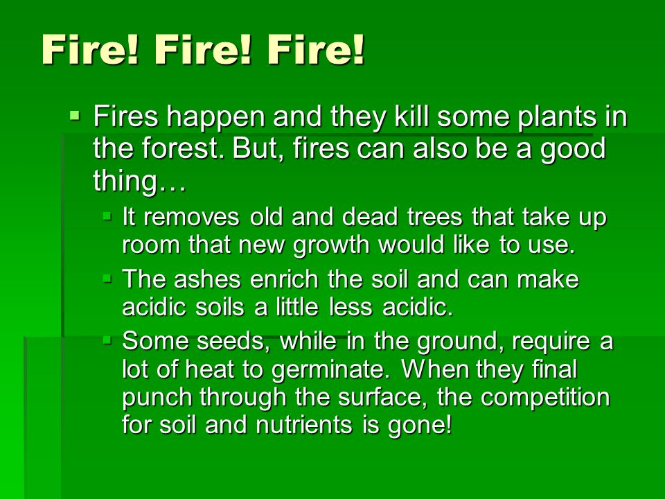 Fire! Fire! Fire! Fires happen and they kill some plants in the forest. But, fires can also be a good thing…