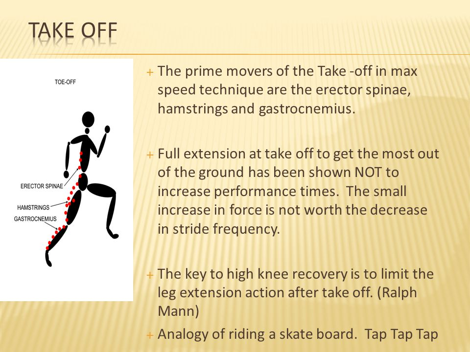 Take Off The prime movers of the Take -off in max speed technique are the erector spinae, hamstrings and gastrocnemius.