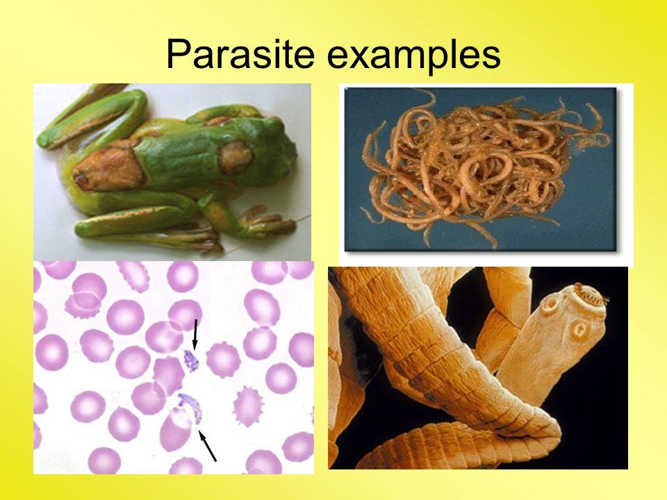 Parasite examples