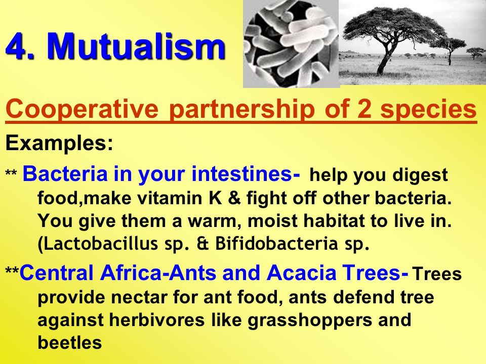 4. Mutualism Cooperative partnership of 2 species Examples:
