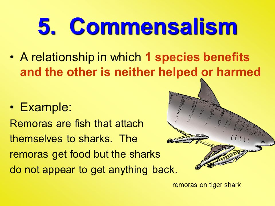 5. Commensalism A relationship in which 1 species benefits and the other is neither helped or harmed.
