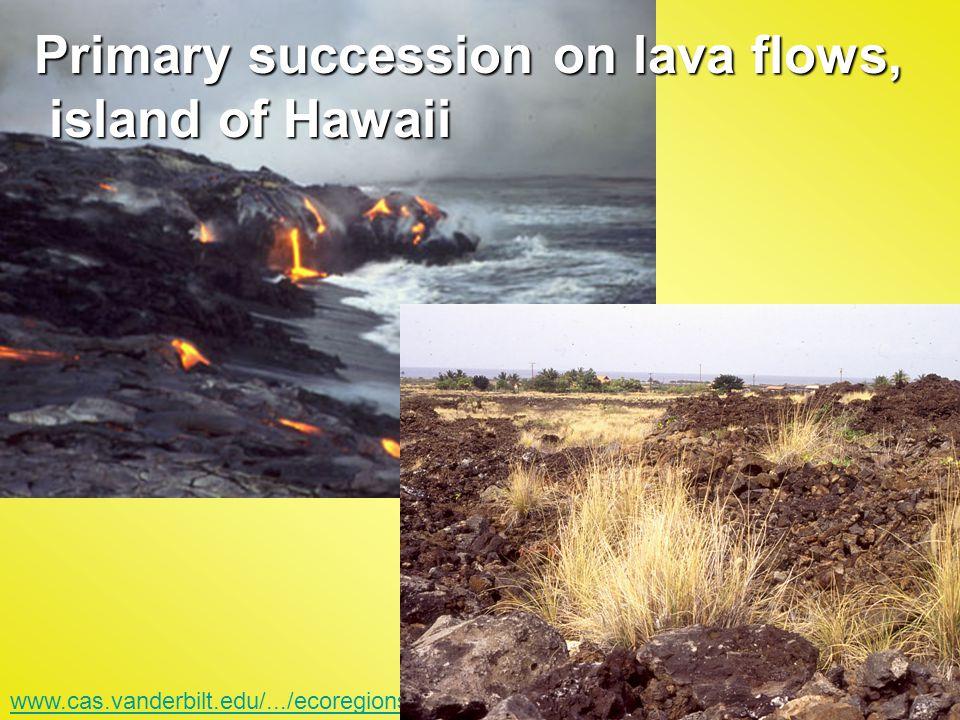 Primary succession on lava flows, island of Hawaii