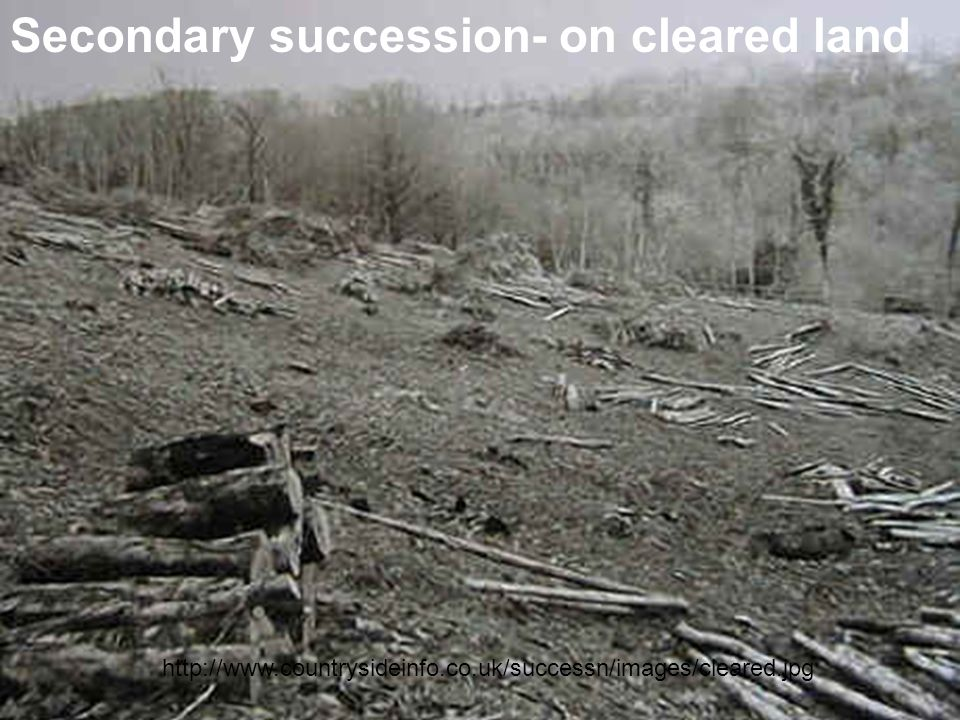 Secondary succession- on cleared land