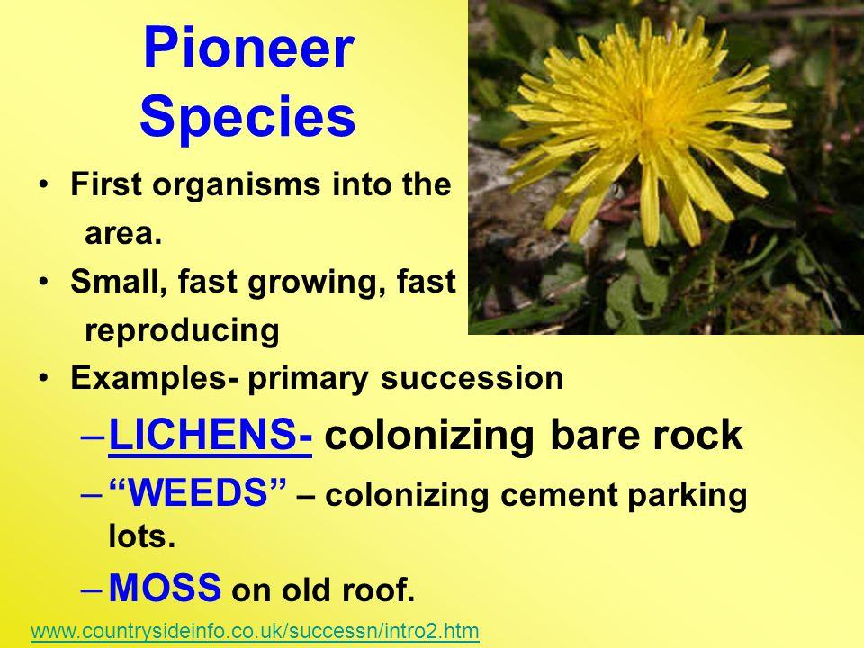 Pioneer Species LICHENS- colonizing bare rock