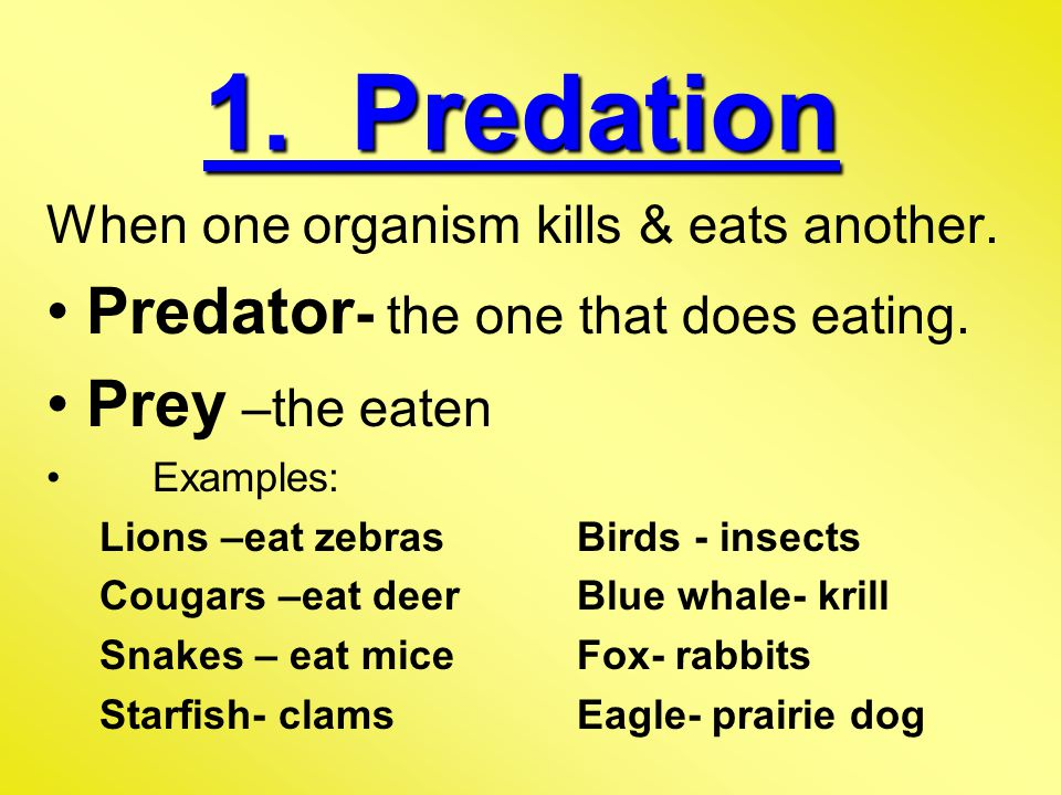 1. Predation Predator- the one that does eating. Prey –the eaten