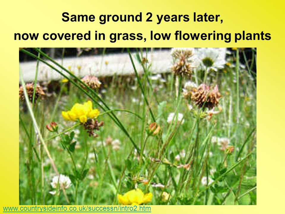 Same ground 2 years later, now covered in grass, low flowering plants