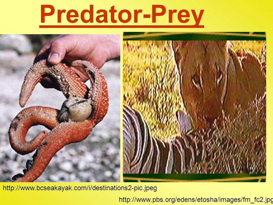 Predator-Prey http://www.bcseakayak.com/i/destinations2-pic.jpeg