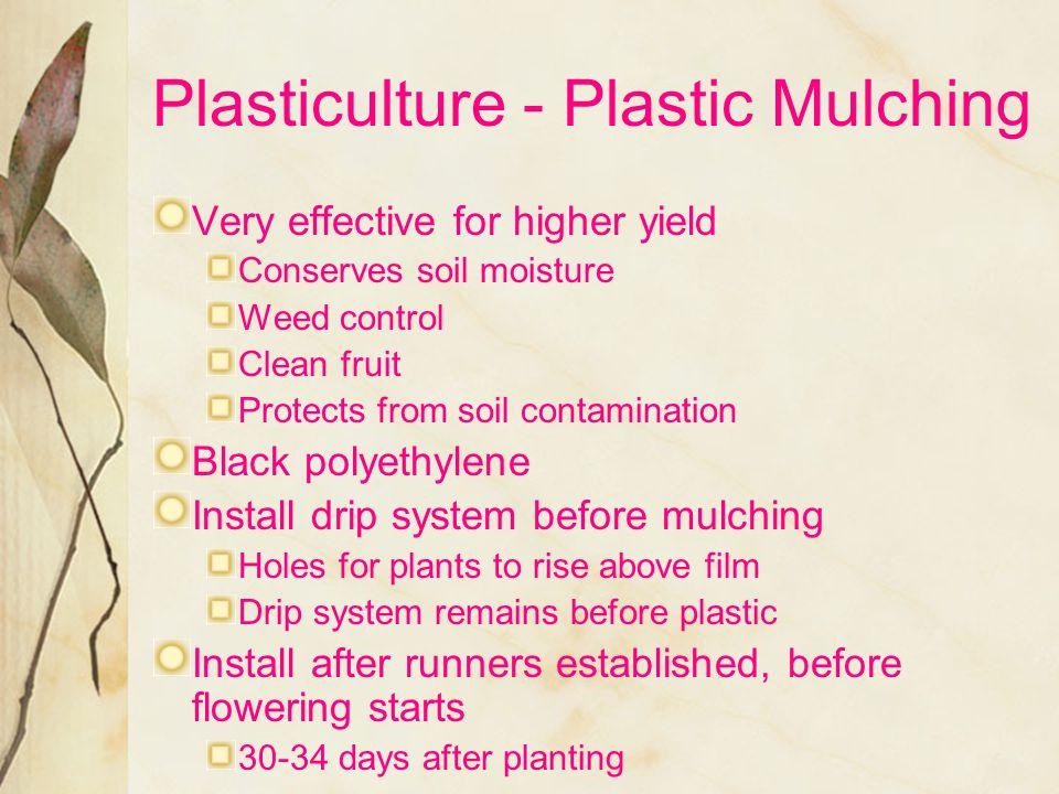 Plasticulture - Plastic Mulching