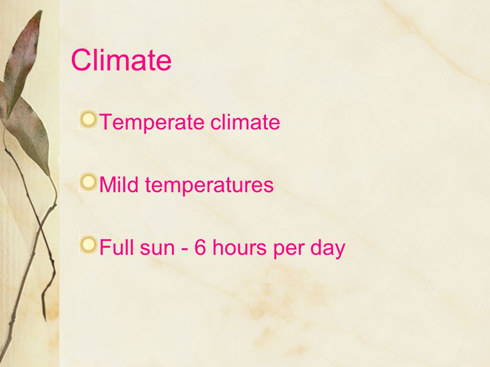Climate Temperate climate Mild temperatures Full sun - 6 hours per day