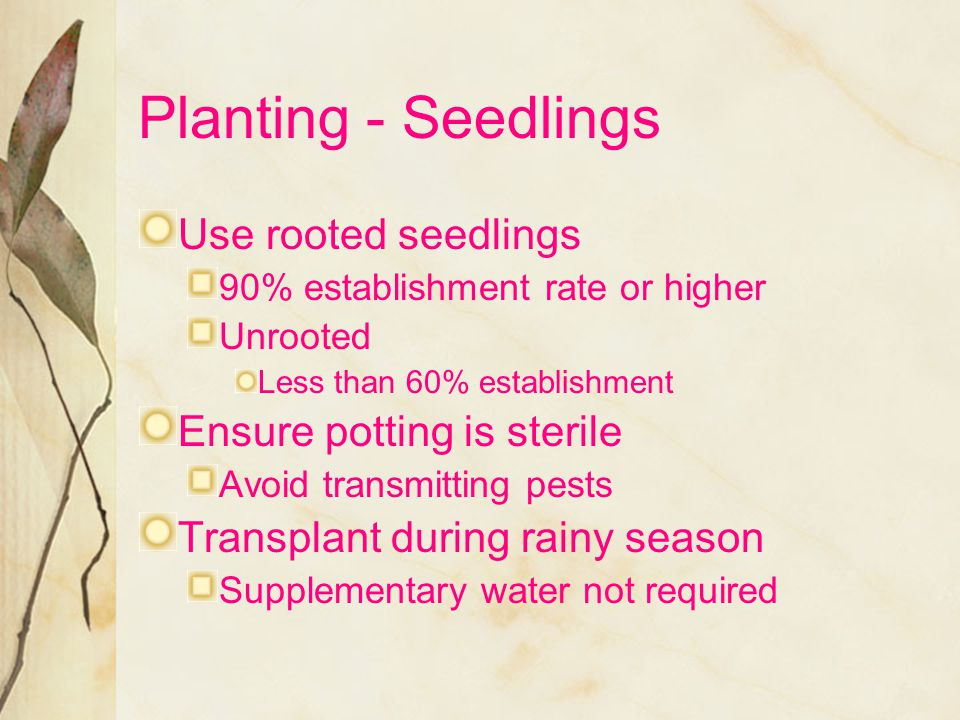 Planting - Seedlings Use rooted seedlings Ensure potting is sterile