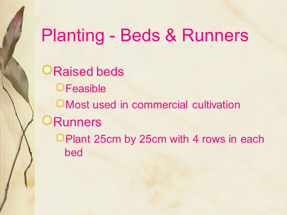 Planting - Beds & Runners
